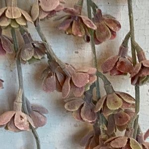 Anthropologie Accents - Anthropologie Faux Trailing  Succulent Stem